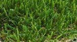 דשא סינטטי טבע סדרת קלאסיק