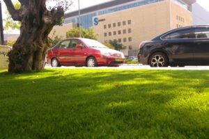דשא סינתטי לשטח ציבורי