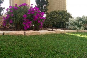דשא סינטטי למרפסת מחיר