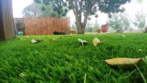 דשא סינטטי ומסכי LCD
