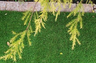 דשא סינטטי בערד