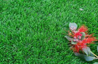 דשא סינטטי בגני תקווה