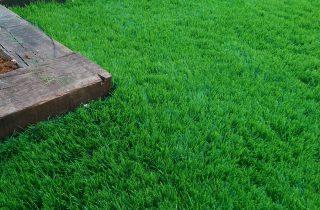 דשא סינטטי בקריית טבעון