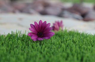 דשא סינטטי יקנעם עילית
