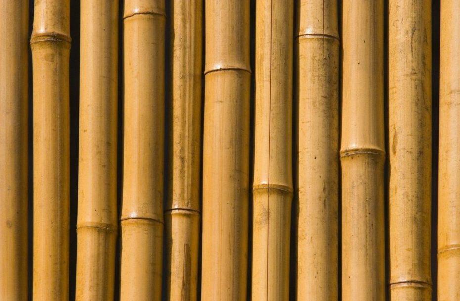 גדר במבוק עבה