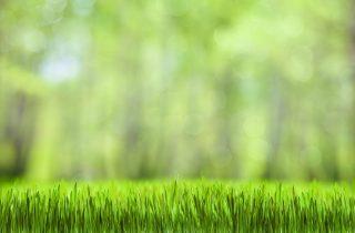 דשא סינטטי באזור השרון