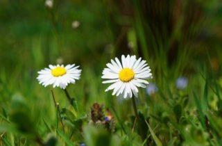 שילוב פרחים בגינה עם דשא סינטטי