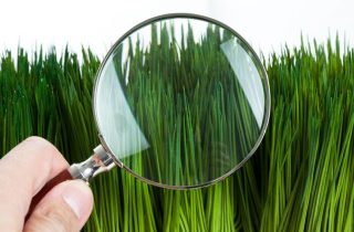 סוגי דשא סינטטי – איך לבחור נכון?