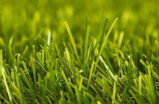 דשא סינטטי במיתר – עומר